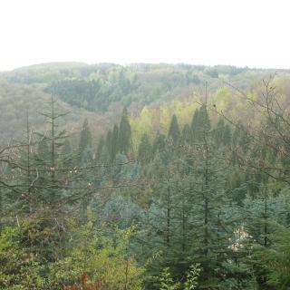 Die grünen Hügel