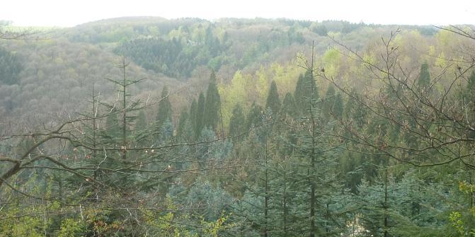 Single trail wuppertal
