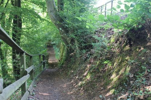 3. Waldrouten-Etappe Volkringhausen - Sundern Amecke