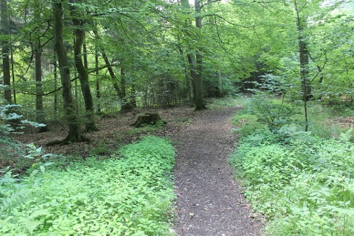 8. Waldrouten-Etappe Hirschberg Fürstenberg - Bilsteintal