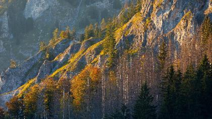 Etappe_10_(c)Wildnisgebiet Duerrenstein Oesterreich _ H Glader