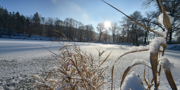 Schlosspark im Winter