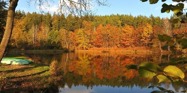 Herbst im Park Leubnitz