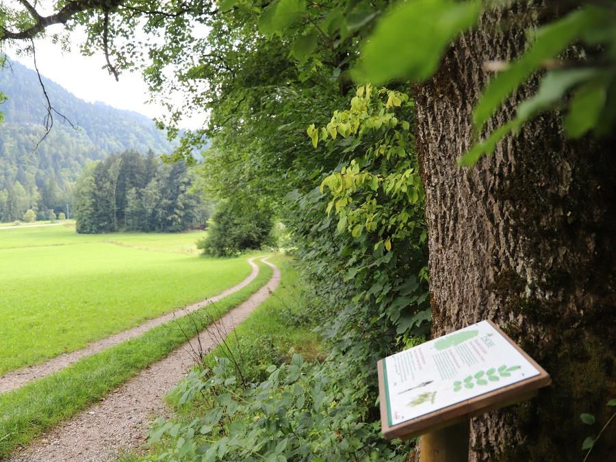 Weg WaldApotheke-©Autor: Tourist Info Aschau im Chiemgau, Quelle: Tourist Info Aschau i.Chiemgau