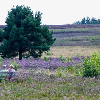 Blick auf die Mehlinger Heide