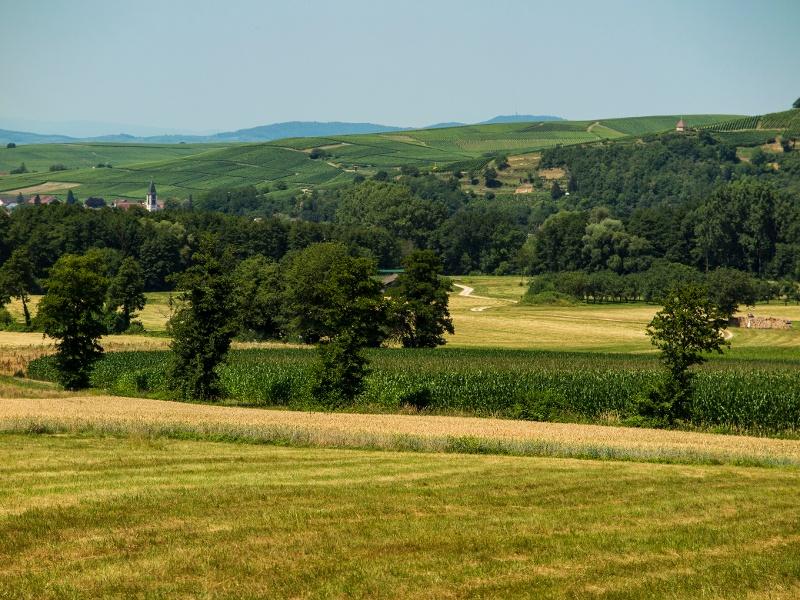 Bettlerpfad: Abschnitt Staufen - Wittnau