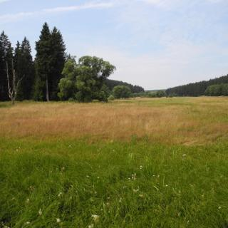 Naturschutzgebiet Bodetal im Juli 2018