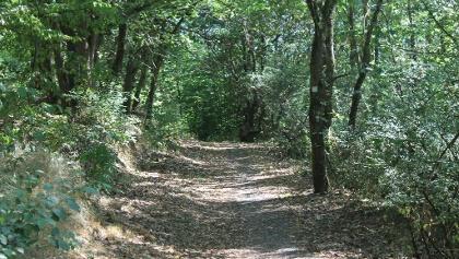 Waldweg am Soldatenfriedhof