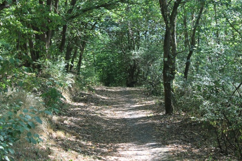 14. Waldrouten-Etappe Marsberg - Diemeltalsperre