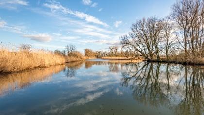 Biesbosch national park