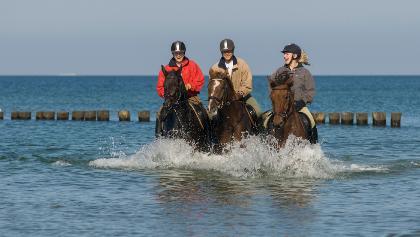 Kühle Erfrischung - mit Pferden an der Ostsee