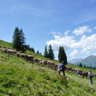 Alpkühe auf der Alp Valpun