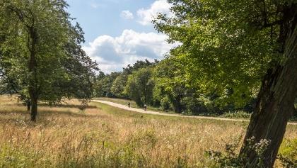 Kerékpárút és turistaút Kövesmező és Törökmező között