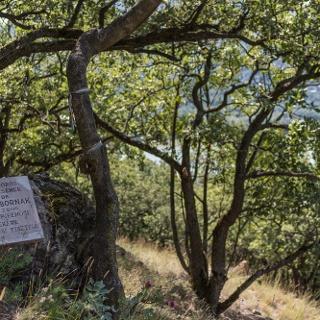Emléktáblát állítottak dr. Gánti Tibor vegyészmérnöknek