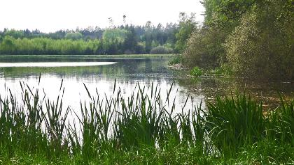 Gehrenweiher im Oettinger Forst