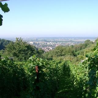 Aussicht auf Weinberge