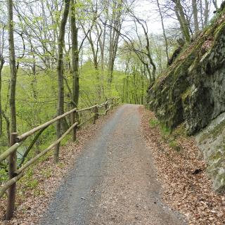 Waldweg in Limbach