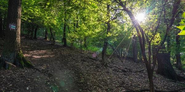 Dél-börzsönyi erdő