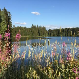 Oberharzer Teichlandschaft