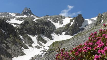 Almrosen und Schnee im Juni
