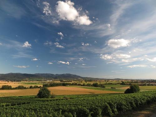 Zwischen Markgräflerland und Breisgau
