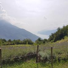 Foto von Mountainbike: 763. Monte Corno • Garda Trentino (13.08.2018 19:06:55 #2)