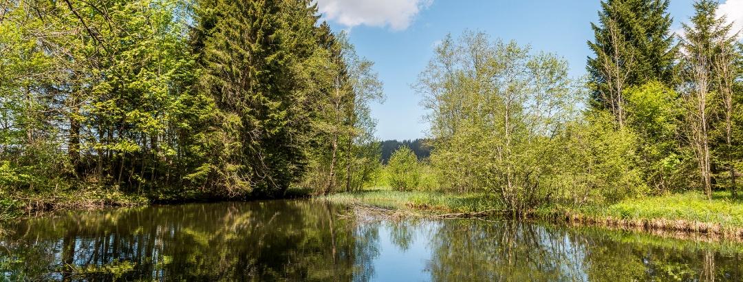 Wandern in Jungholz