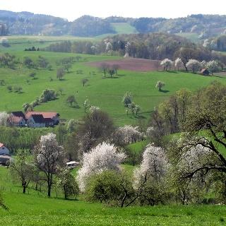 Frühling im Odenwald