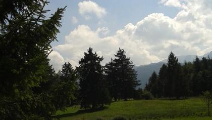 Wald bei Börwang