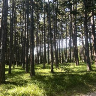 Aufstieg Wald