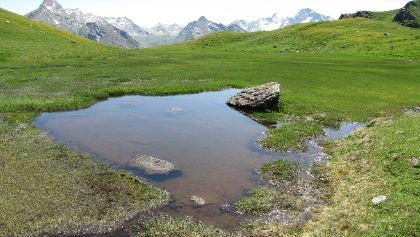 Feuchtwiesen unterhalb des Kreuzjochs, Blick zur Texelgruppe