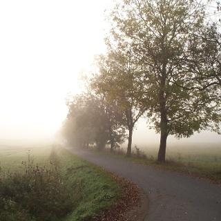 Der Pummpälzweg bei Nebel nahe Profisch