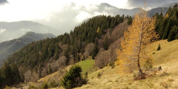 Shepards Trail in autumn