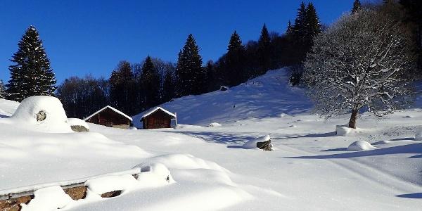 Schneeschuhtour Brünigpass-Ober Brünig-Lungern