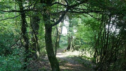 Durch den Grosswald
