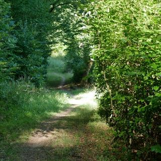 Auf einem Pfad durch den Grosswald