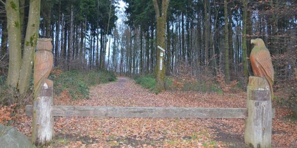 Weg zur Vulcano Infoplattform_Vulkaneifel-Pfad: Vulcano-Pfad Schleife Ost