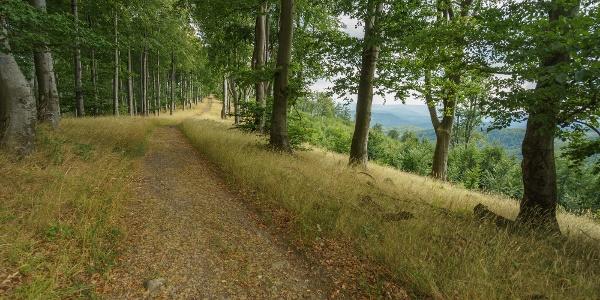 Az összezáródó erdő a Három-hárs gerincén