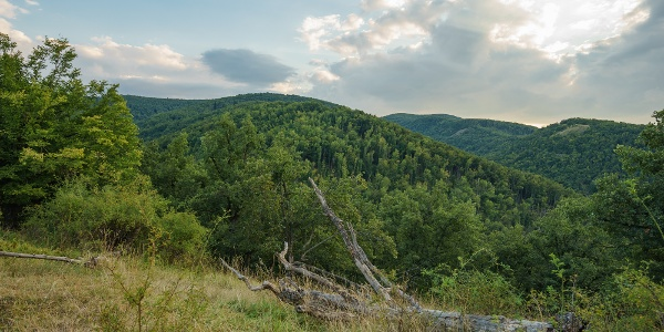Kilátás a szomszédos erdőkre a Jelesfáról
