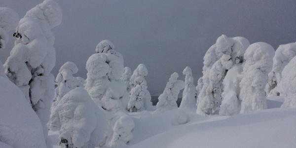 Tykkylunta Pyhävaarassa, Rukalla, Kuusamossa