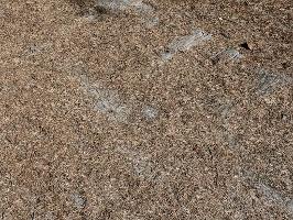 Foto Bild 5: Es heisst ja auch Borkenkäfer und nicht Nadelkäfer