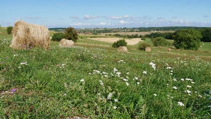 Blick über die Felder nach Wœlfling-lès-Sarreguemines