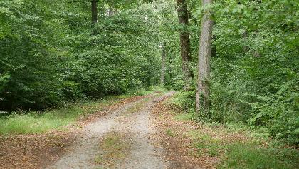 Durch den Kappellenwald