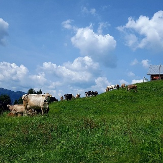 Alpe Unterdiedams