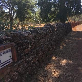 The road to Corteconcepción.