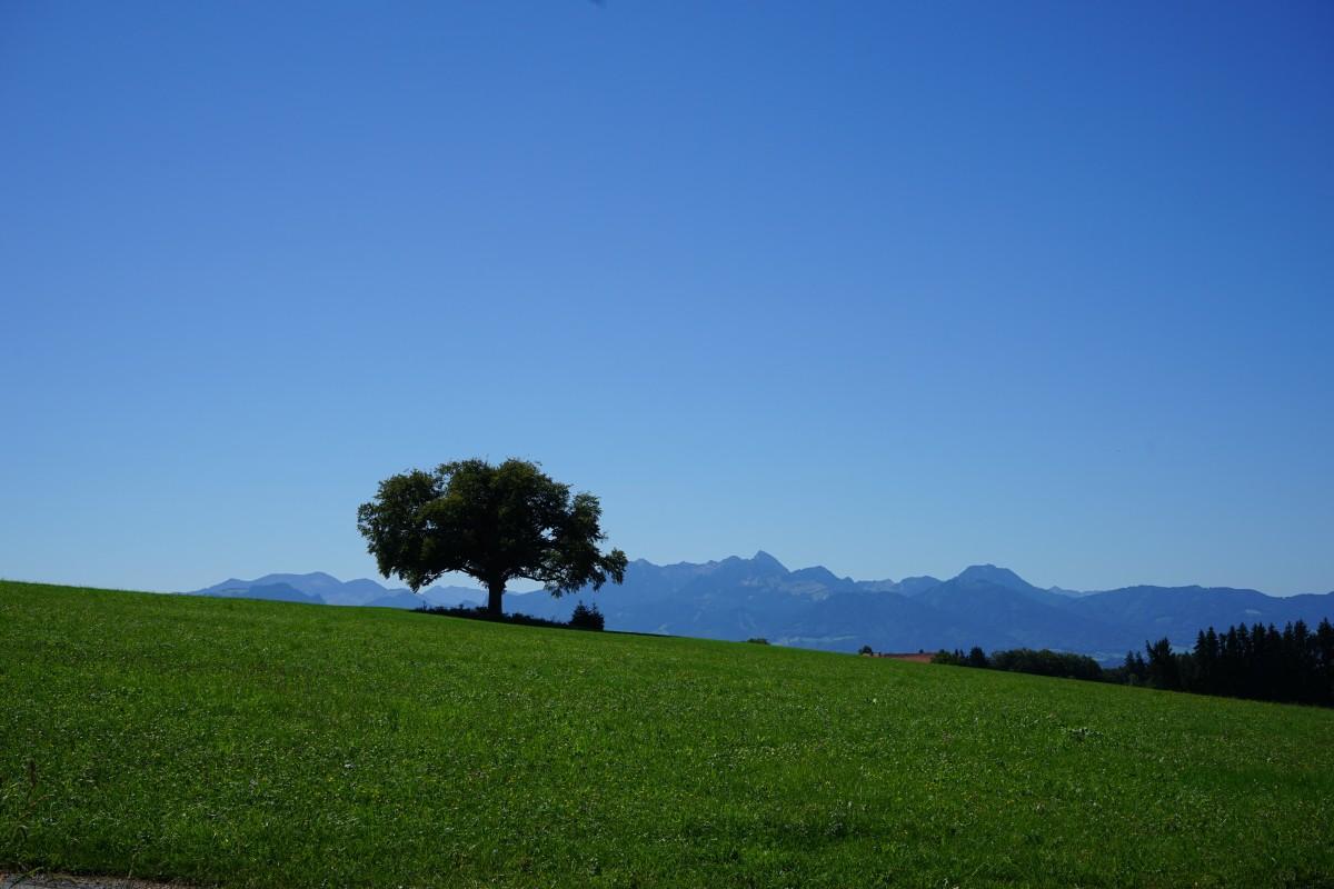 Blick in die Mangfalltaler und Inntaler Berge von Bergham