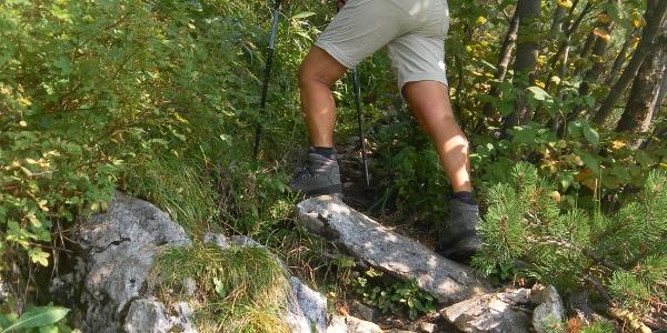 Gipfelsteig zum Gurnwandkopf