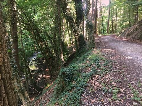 Waldweg zwischen Güttingen und Liggeringen