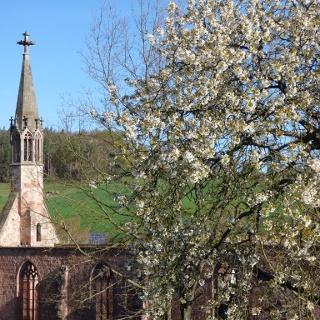 Kloster Rosenthal Frühling