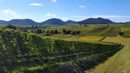 Wanderreise ohne Gepäck auf dem Herzstück des Pfälzer Weinsteigs (Foto: Gabi Kuminek, Bildarchiv Südliche Weinstrasse e.V.)